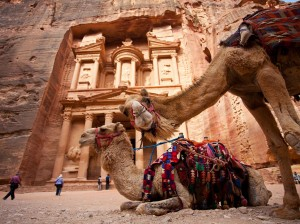 Camels in front of the Treasury, Petra